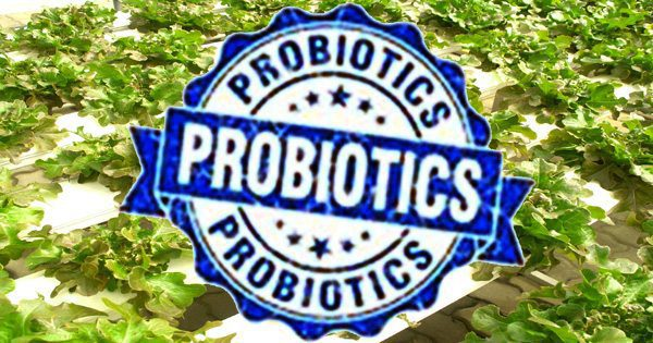 blog picture of farm vegetables and a stamp that says probiotics