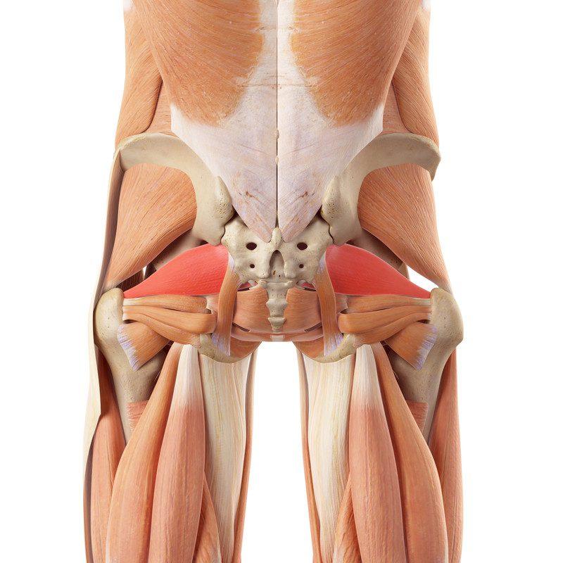 Piriformis Treatment El Paso Tx Chiropractor Dr Jimenez Dc